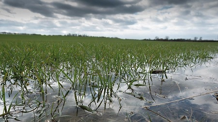Extreme Weather and Your Investments - Flooded Crops